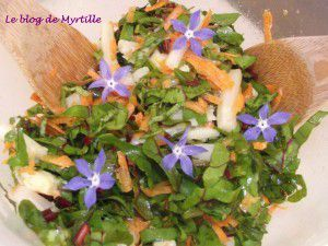 Salade aux fanes de betteraves et bourrache