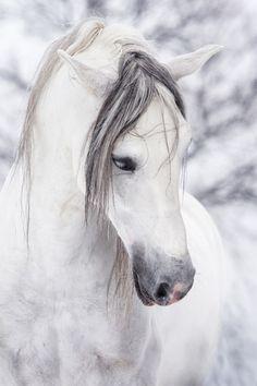 #Le cheval noir a tache blanche