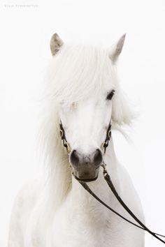 #5le cheval fantôme