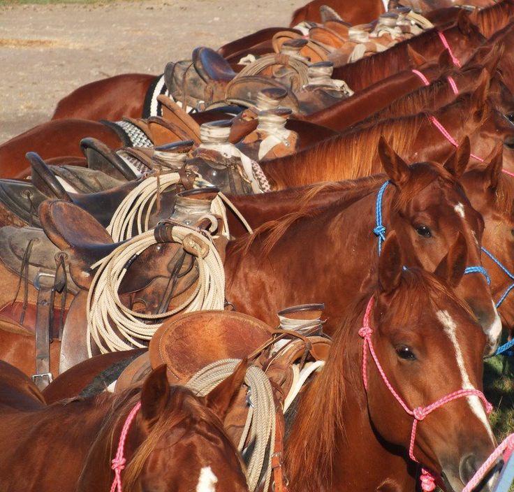 Les Quater Horse Aligné