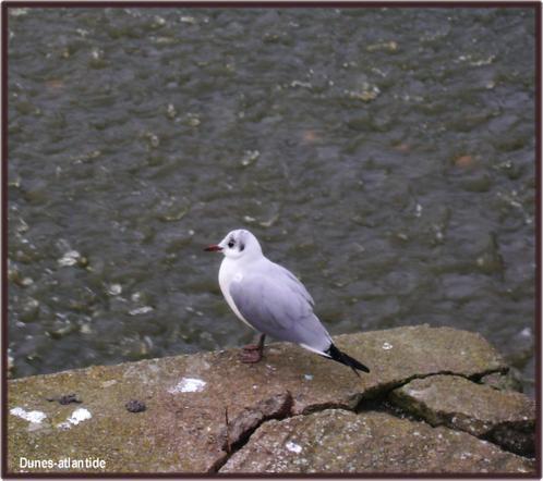 Pornic  ... des  oiseaux.... des  petites  criques