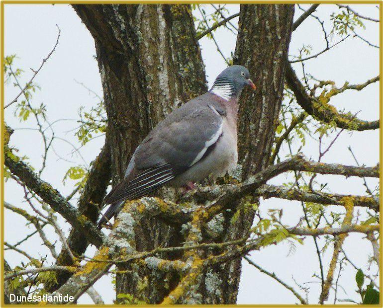 Le  bain  des  pigeons  dans  le  jardin !