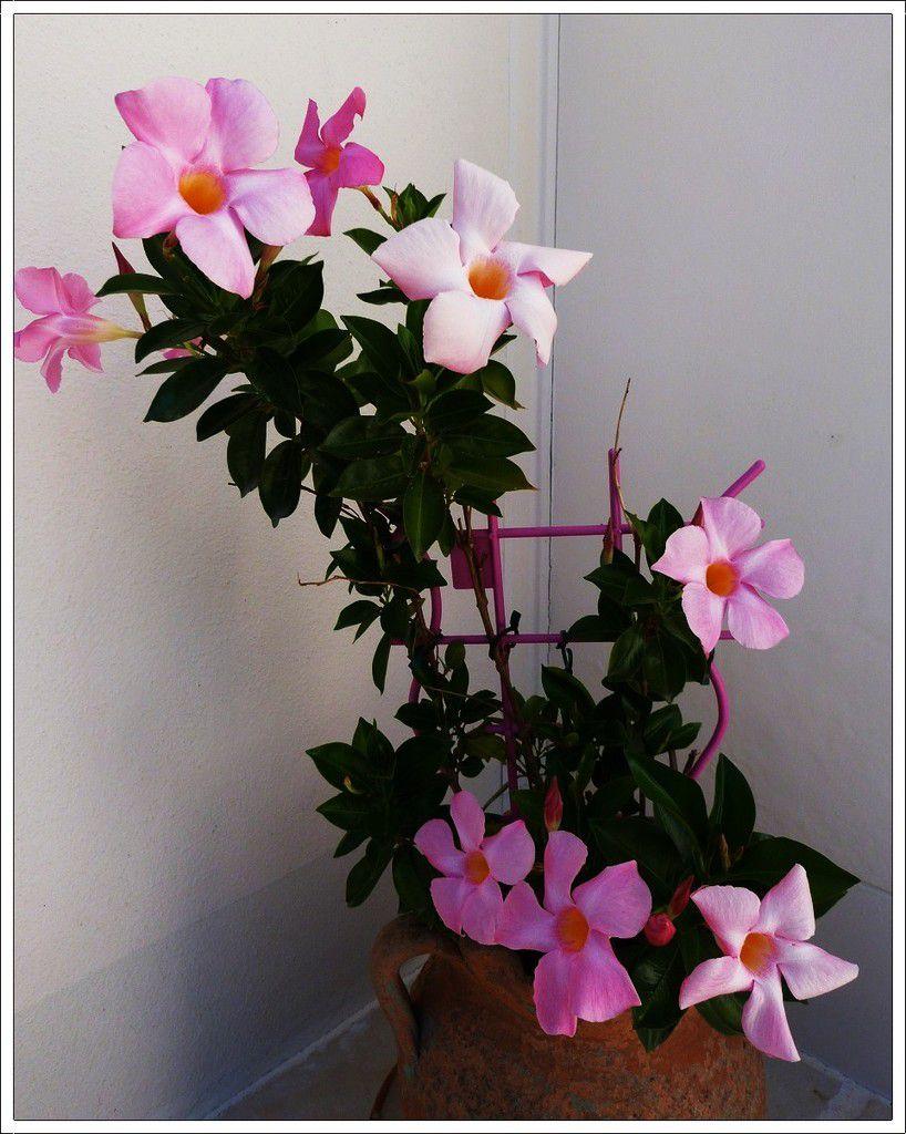 Quelques  fleurs  du jardin , de  la  terrasse