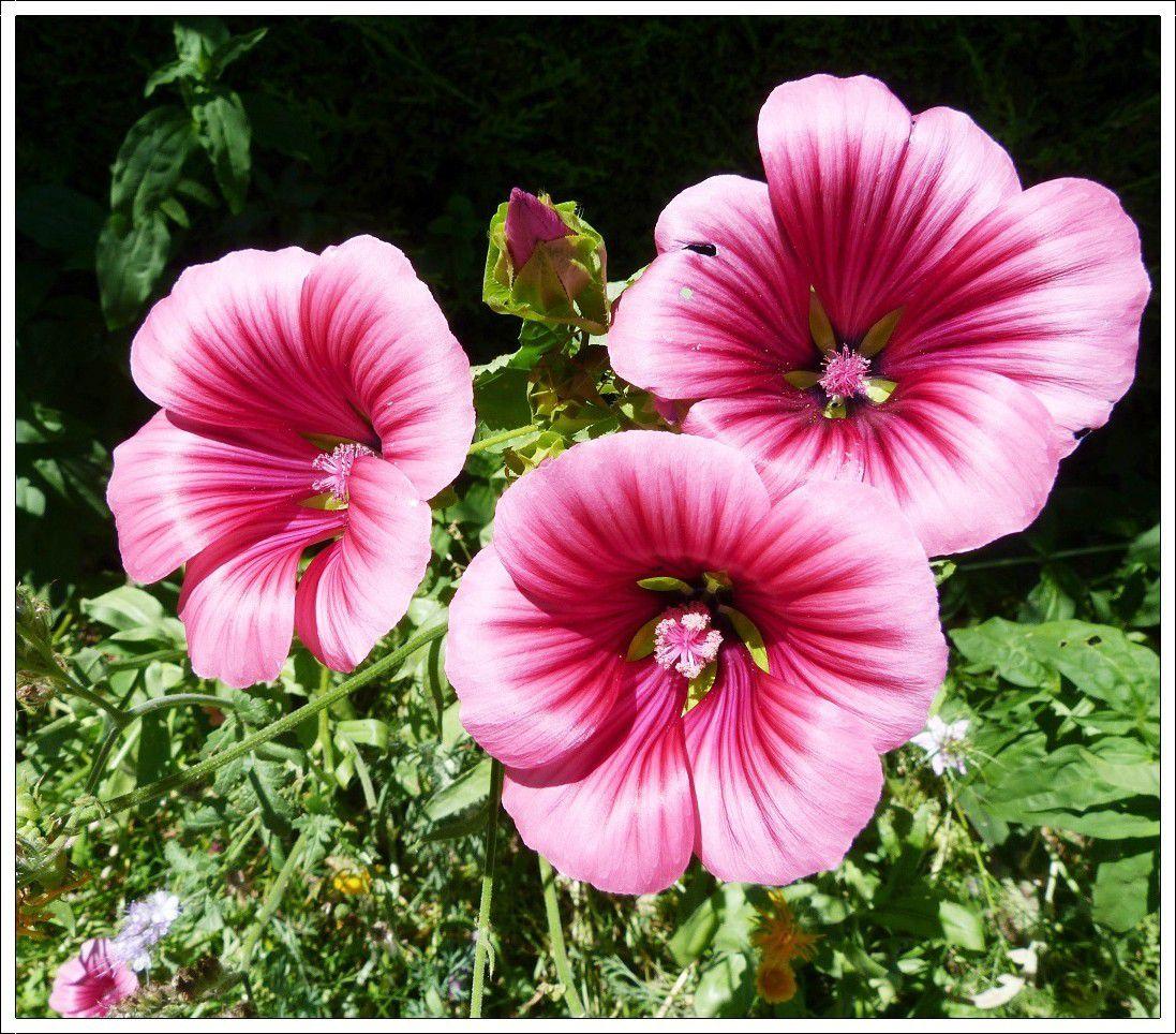 Quelques  fleurs du jardin !