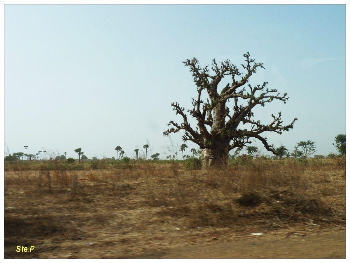 voyage  au Sénégal (suite 3 )