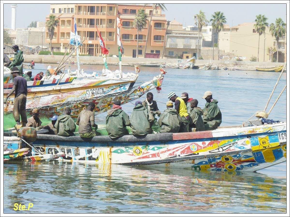 Voyage  au Sénégal : oiseaux et belles  pirogues !