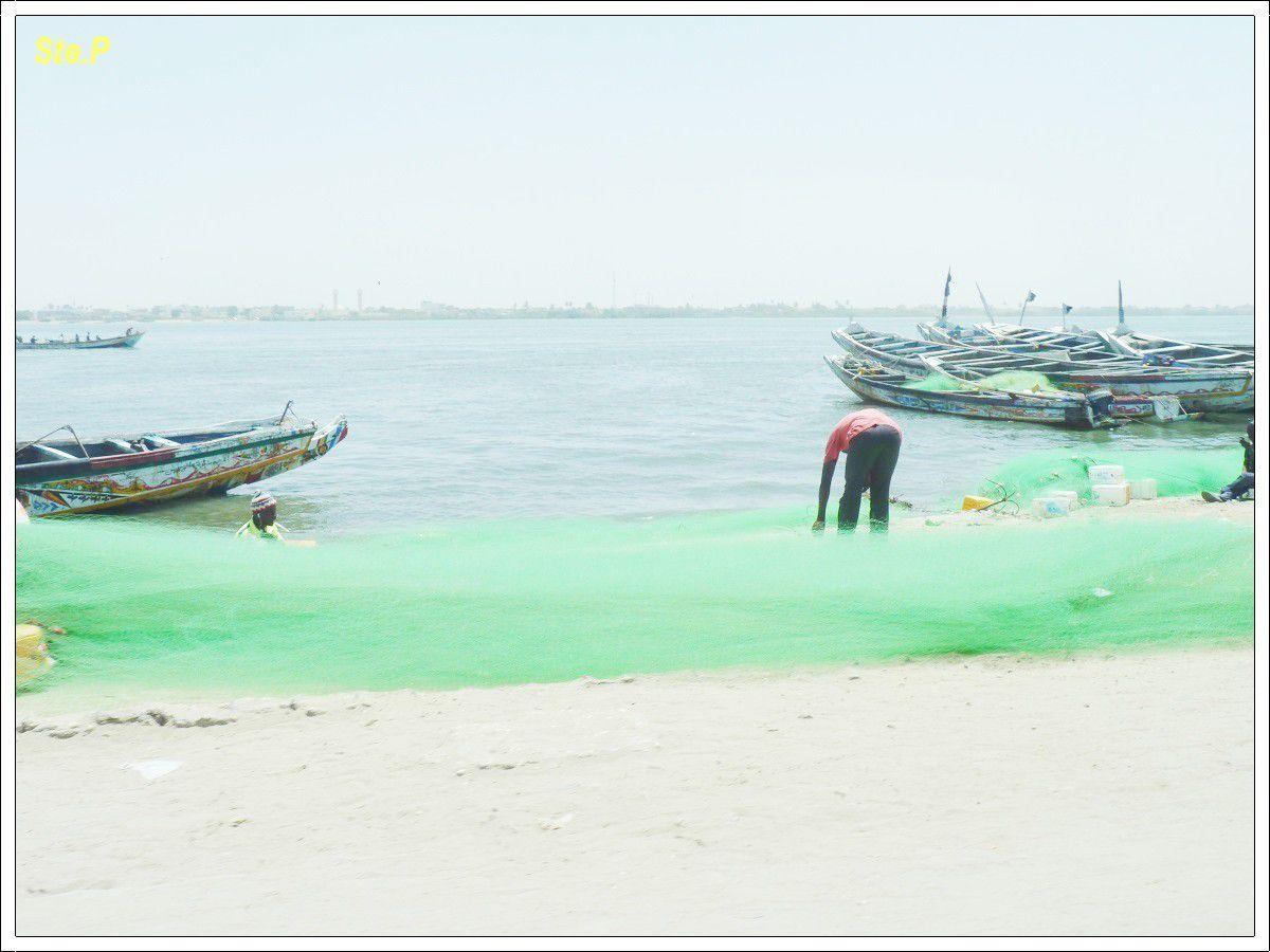 Voyage au Sénégal  (suite  5 )