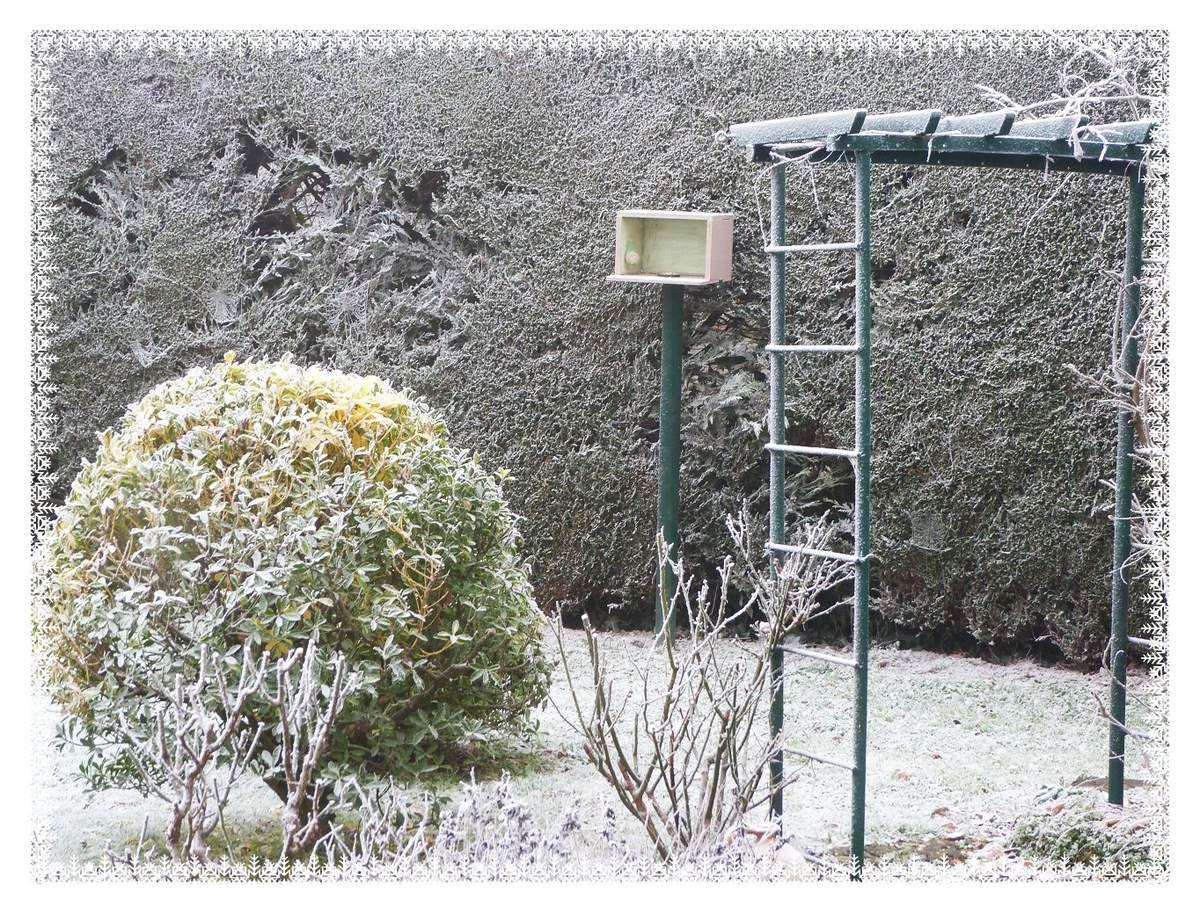 Le  jardin : Coucher de  soleil puis  fine  couche de  neige!