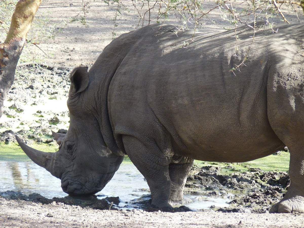 Sénégal parc national et  réserve  d'animaux !