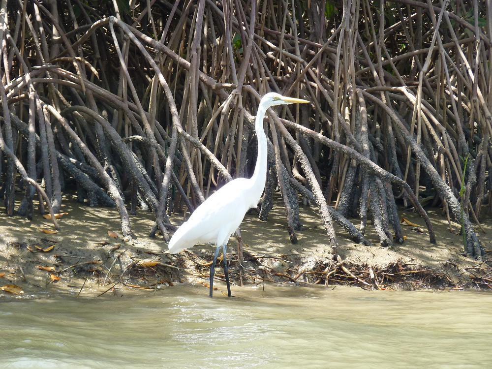 Sénégal : des oiseaux  (suite)