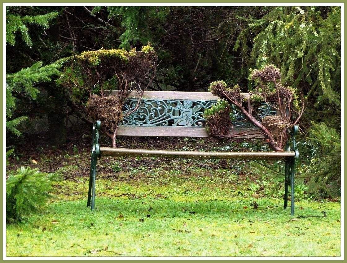 Taille  de  haie  : découverte  de  beaux  nids !