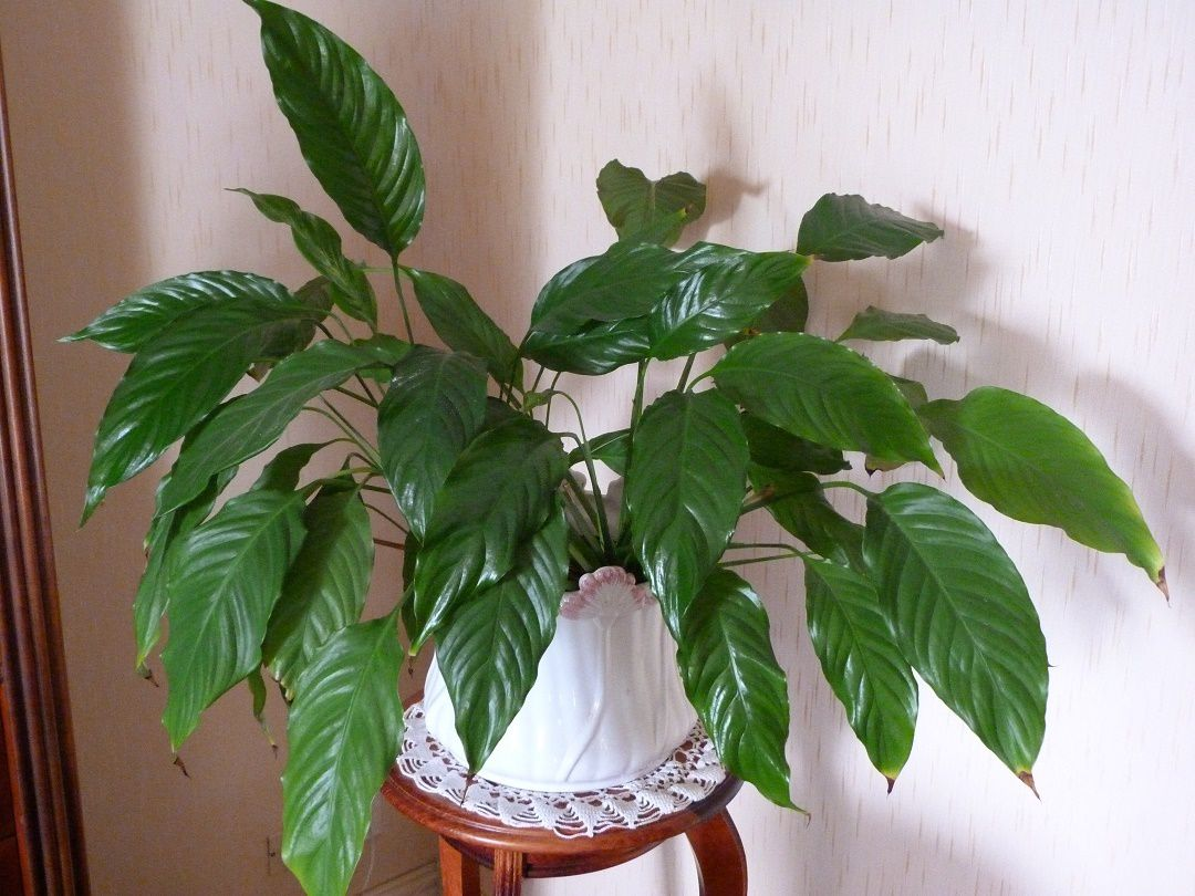 Engrais  naturel pour  nos  plantes  !