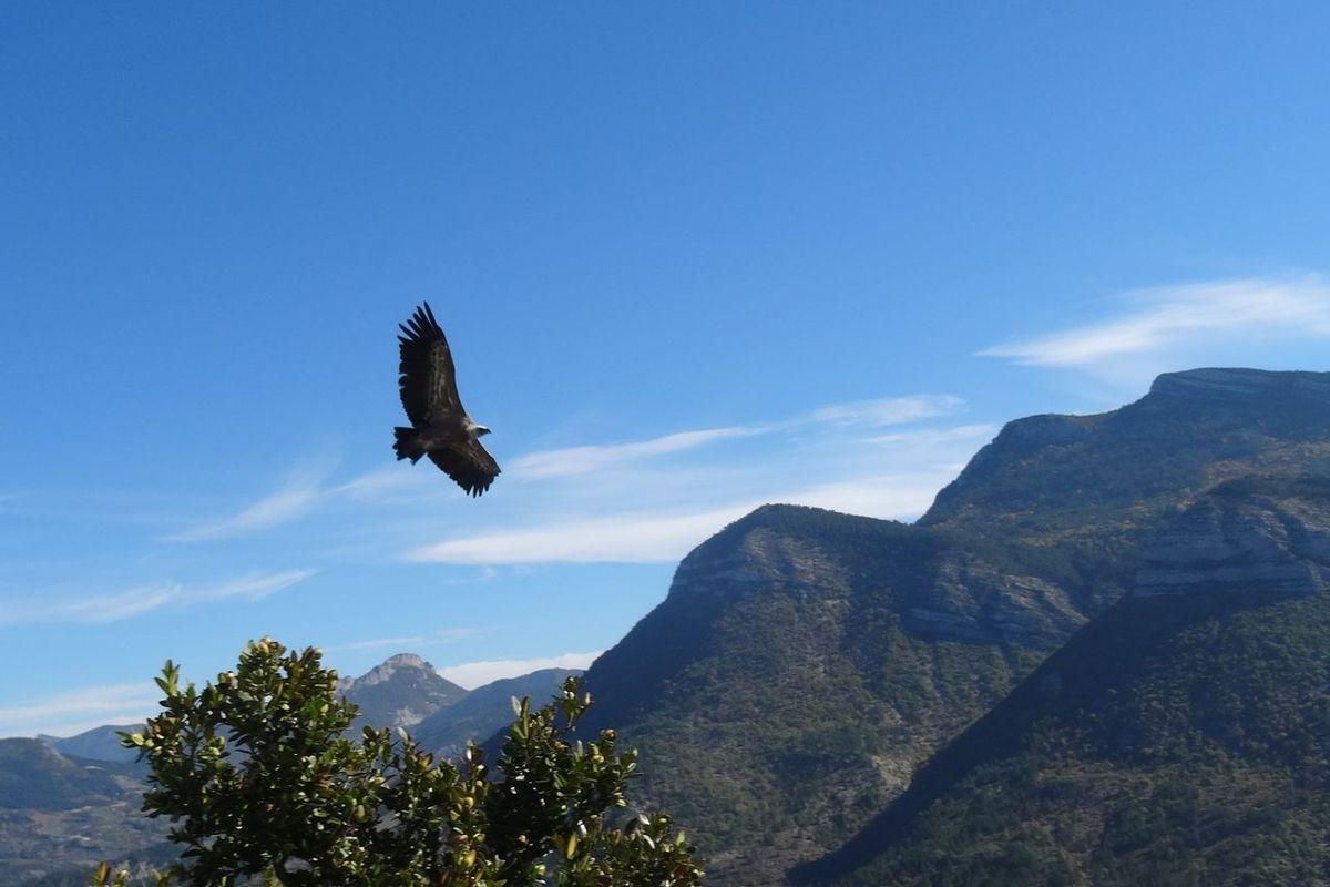 Marche avec les vautours