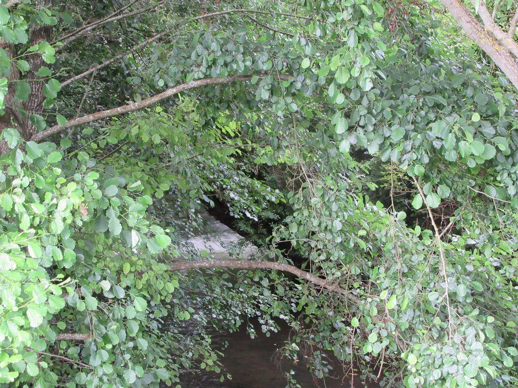 La Touques se cache sous le couvert végétal ...