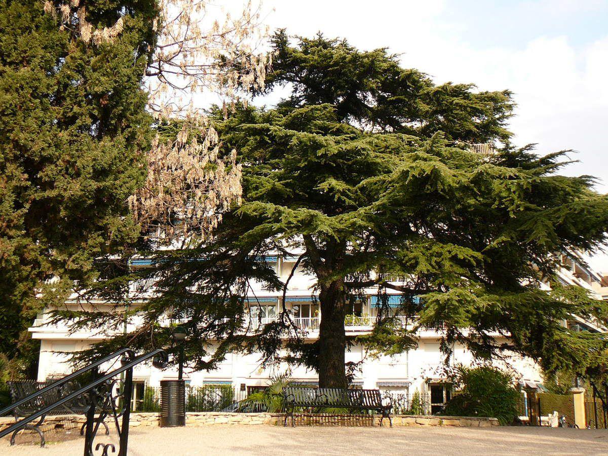 Cèdre Square Carnot . MLR
