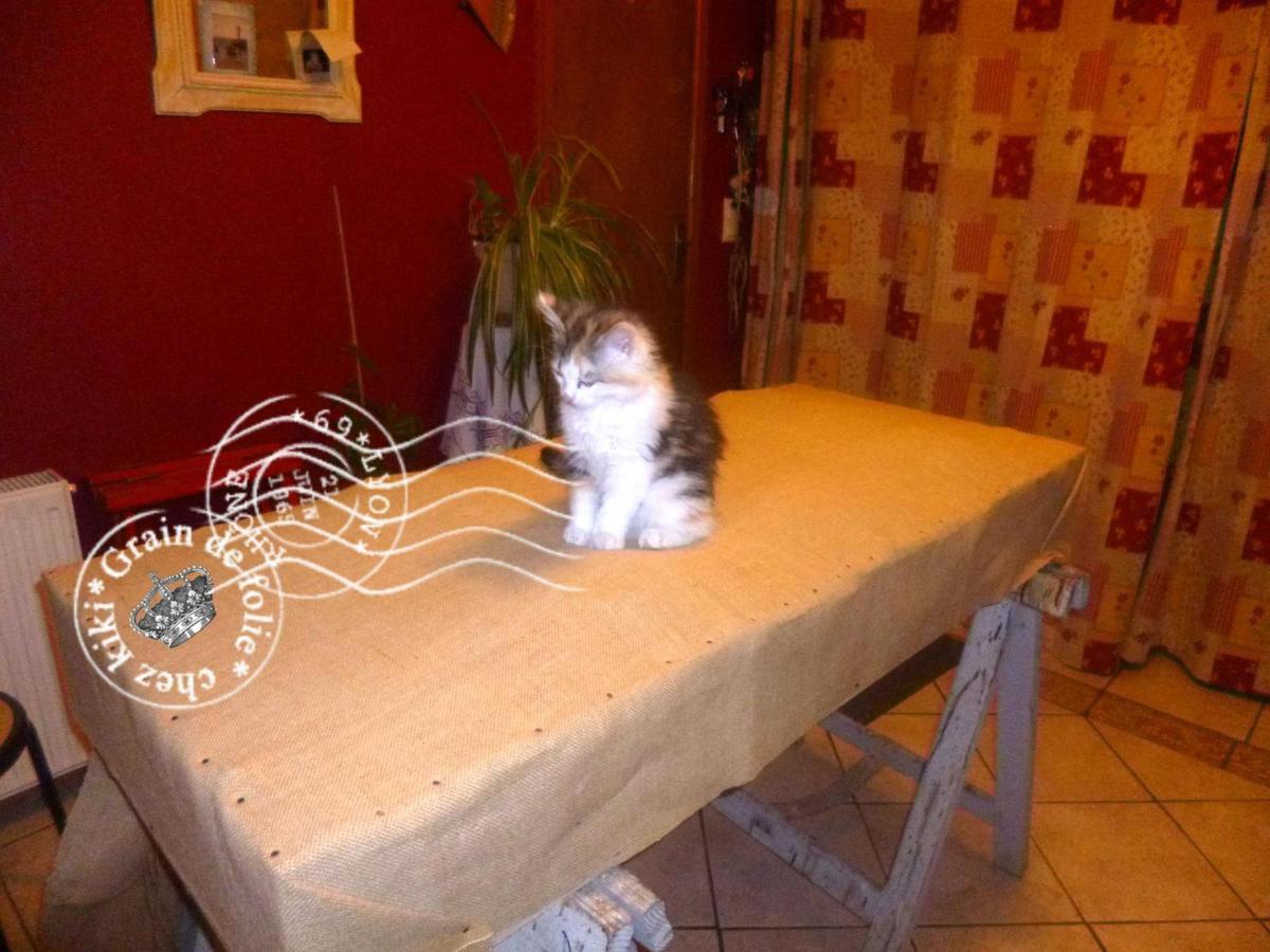 restauration d 39 un sommier tapissier grain de folie chez kiki. Black Bedroom Furniture Sets. Home Design Ideas