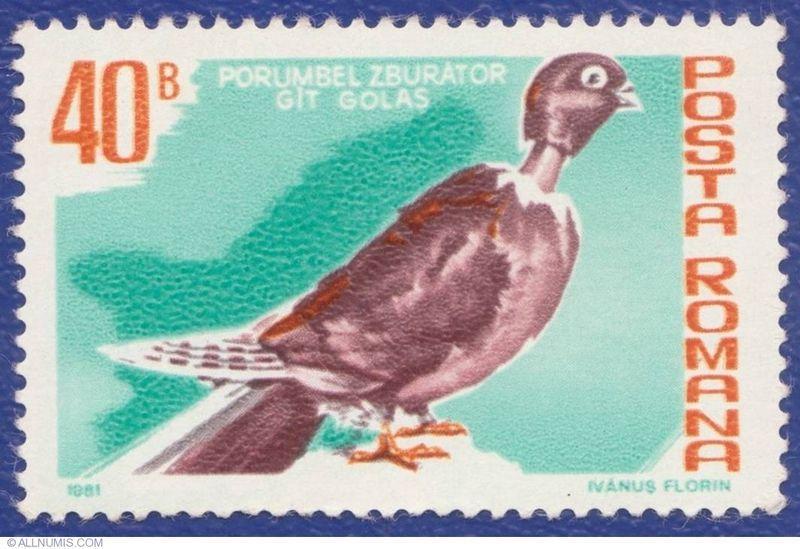 Un pigeon cou-nu