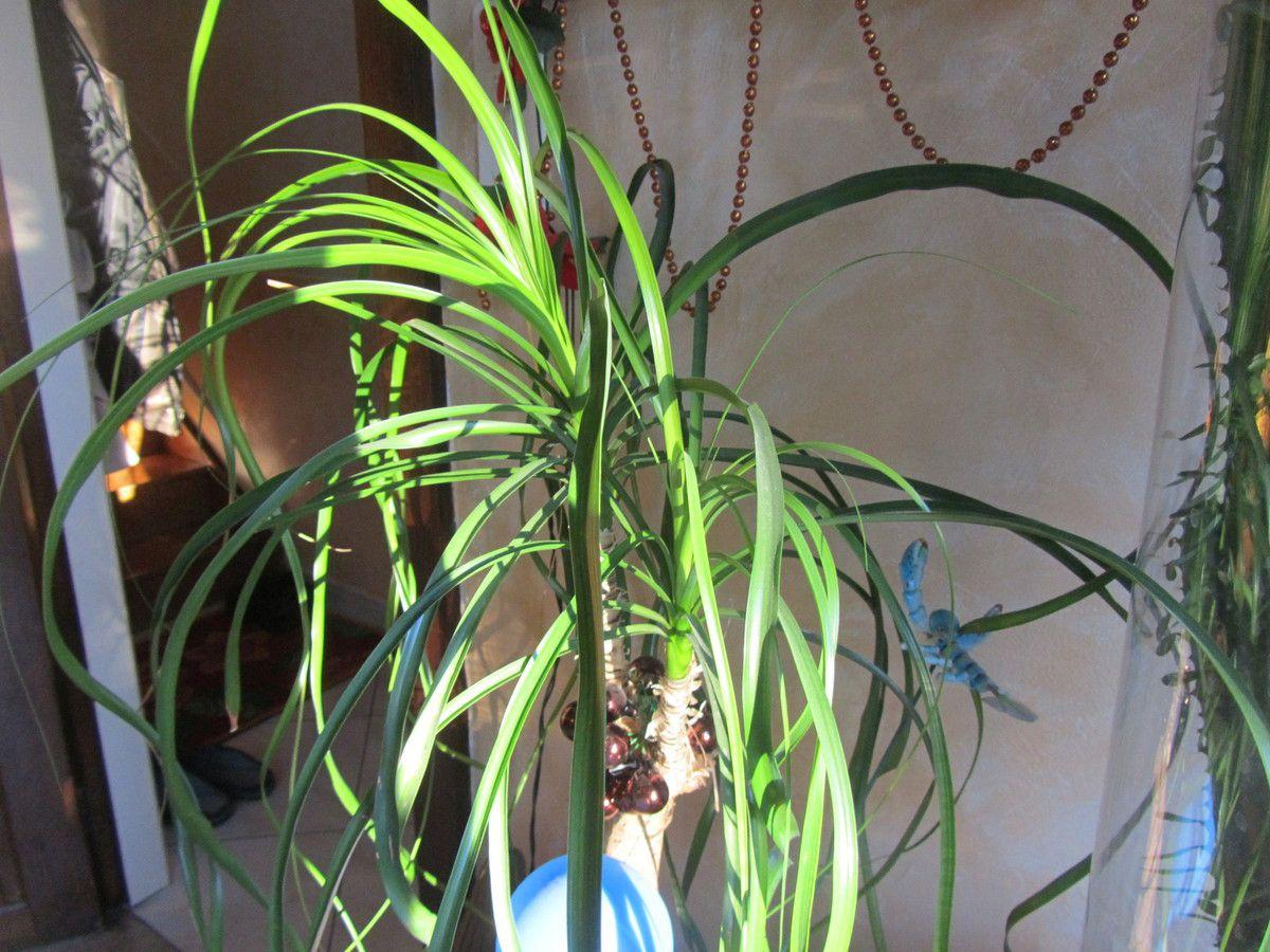la plante aussi  a son rayon de soleil qui la traverse.