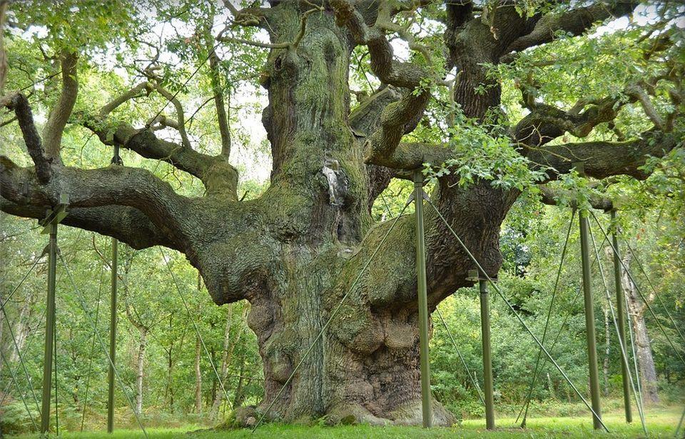 La forêt de Sherwood, future ZAD de «Robin des bois» écolos ?