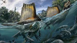 Le Spinosaurus, un redoutable dinosaure &quot&#x3B;mi-canard mi-crocodile&quot&#x3B; qui savait nager.