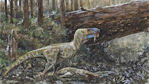 Les tyrannosaures étaient-ils cannibales ? Le crâne d'un cousin du T.rex pourrait le confirmer.