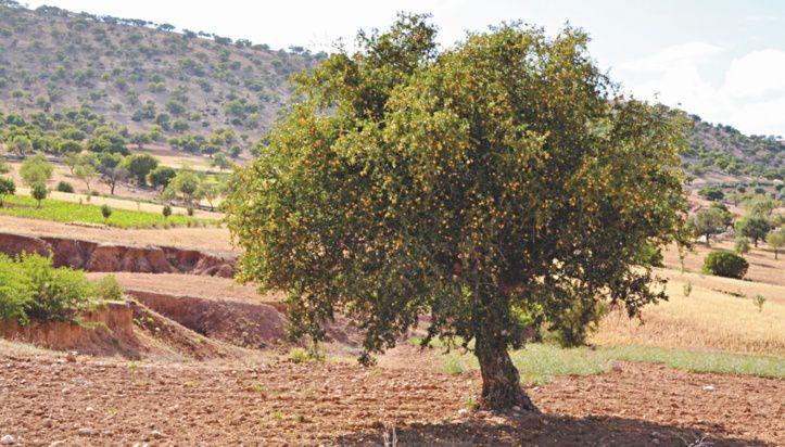 La science au service d'un arbre providentiel