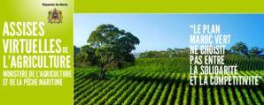 """L'arganiculture, pilier du plan ambitieux """"Maroc Vert"""""""
