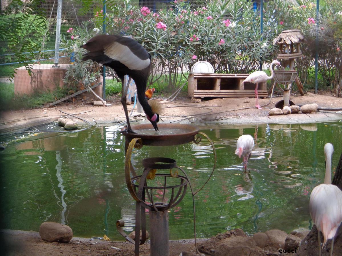 Étalée sur une superficie de 2,5 hectares, la vallée des oiseaux compte plus de 500 espèces de volatiles et près d'une cinquantaine d'espèces animales.