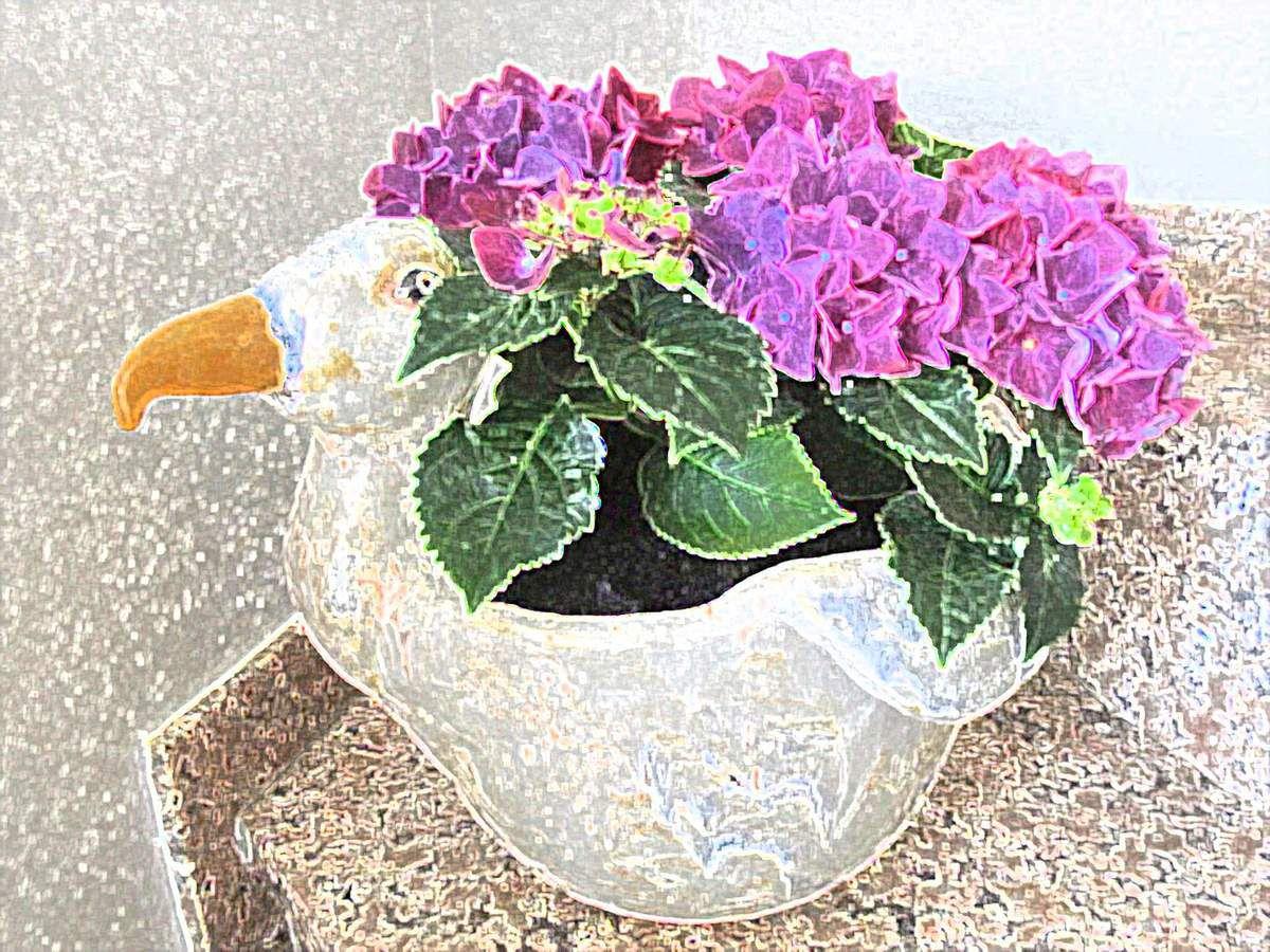 Hortensien in einem Möwenübertopf