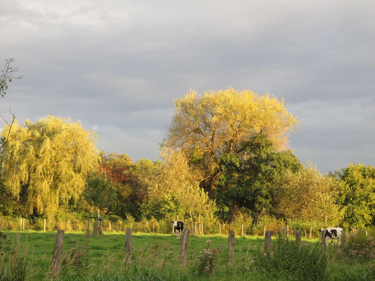 Goldener Oktoberwind