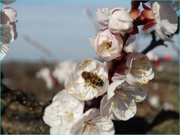Qques fleurs de printemps