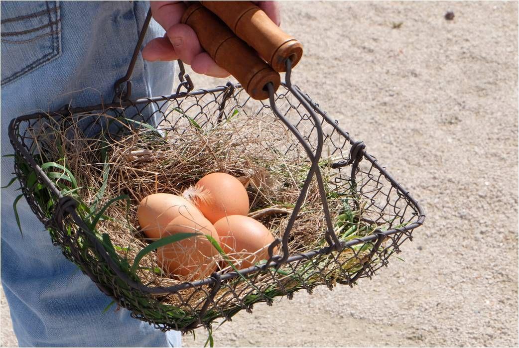 A Pâques, on chasse les oeufs... frais à Montrottier ! (40 000 oeufs frais à trouver dans la campagne !)