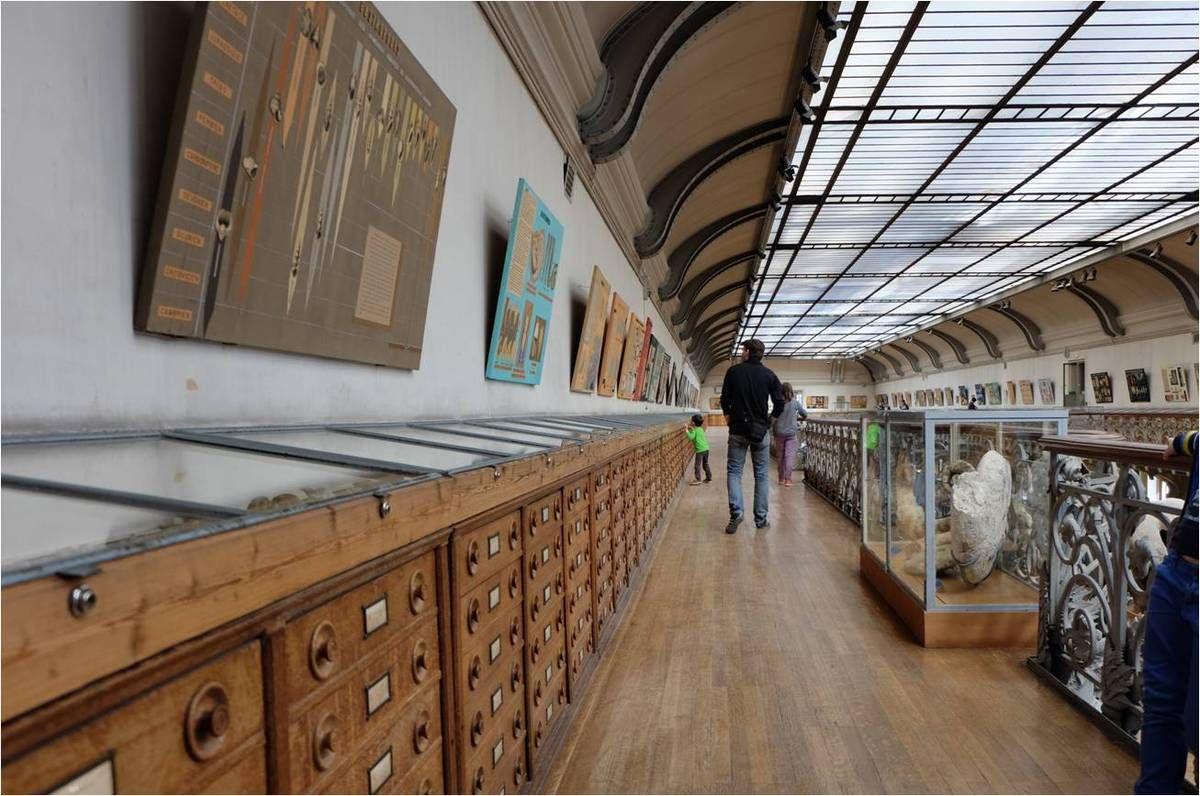 La galerie de paléontologie au Jardin des Plantes