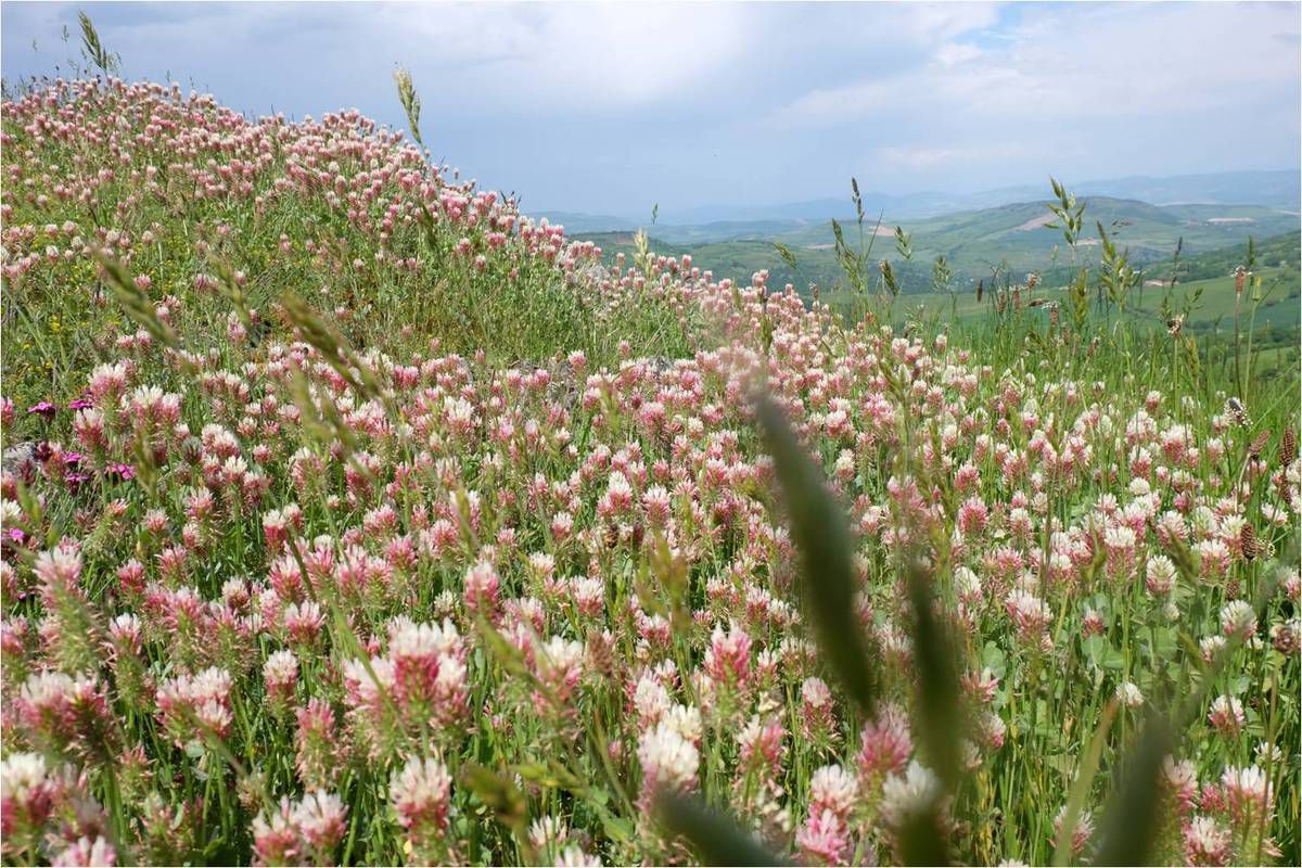 Week-end au vert à Murol en Auvergne