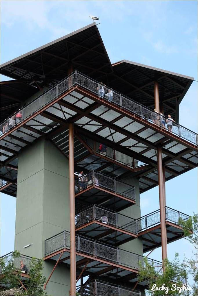 C'est la nouveauté de cette année, la Tour Panoramique vient d'ouvrir (accès payant à 1 €), elle culmine à 26 m et permet d'avoir une vue magnifique sur les oiseaux qui volent en hauteur (si vous avez le vertige s'abstenir !).