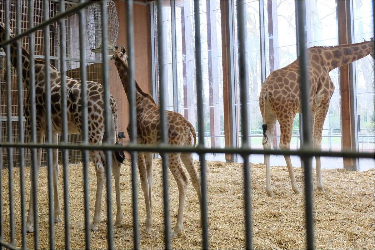 Visite des coulisses du zoo de Lyon, au Parc de la Tête d'Or
