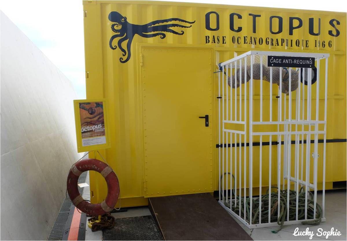 Octopus, atelier enfant du Musée des Confluences