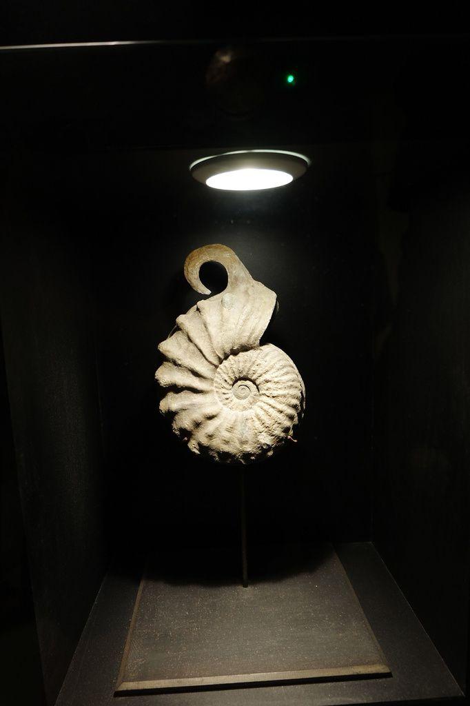 Paléo-galerie, l'extraordinaire Musée des Fossiles de Salignac