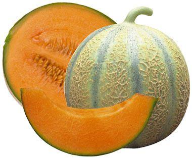 Les melons le jardin du chat - Quand recolter les melons ...