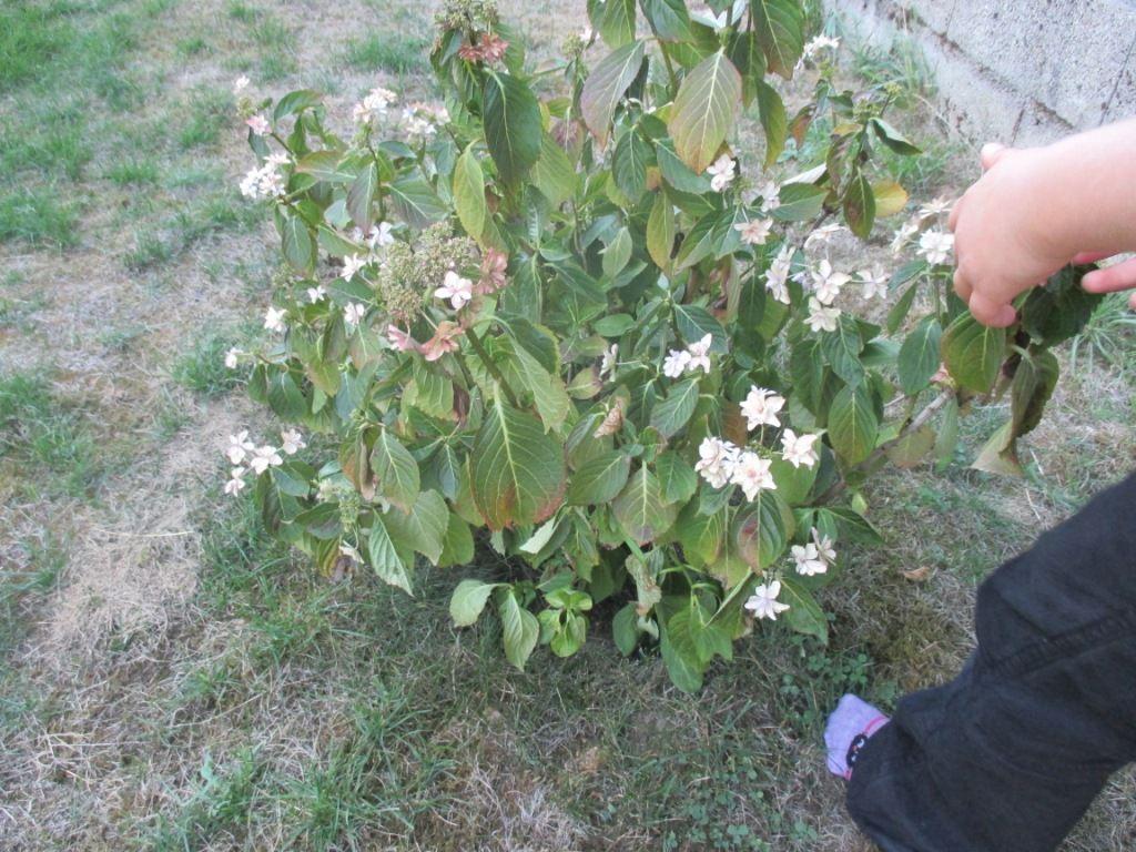 Les plantes du jardin les plus rentables le jardin du chat for Jardin du plantes