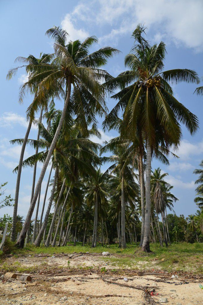 Thaïlande 2015 : Koh Phangan , pas une , pas deux , mais trois ...