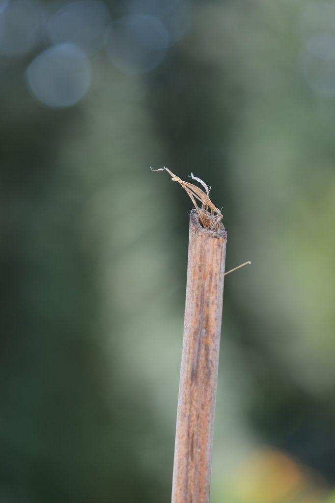 Où je guette au trou : Isodontia mexicana seconde partie ...