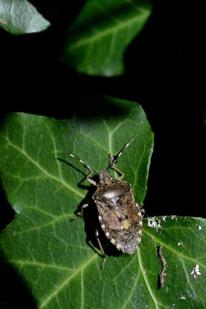 Les insectes du moment ...