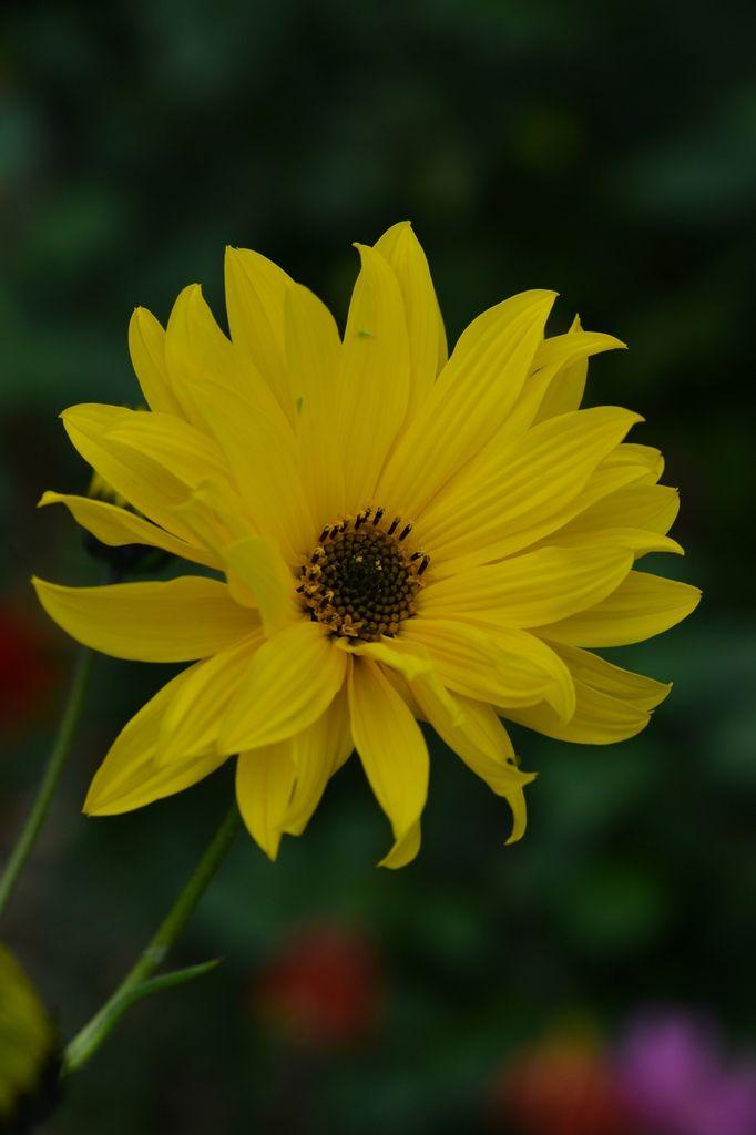 Un peu de jaune ...