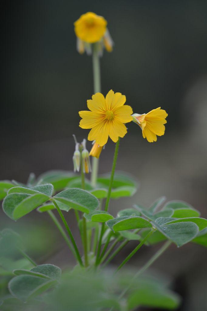 Une petite fleur jaune ...