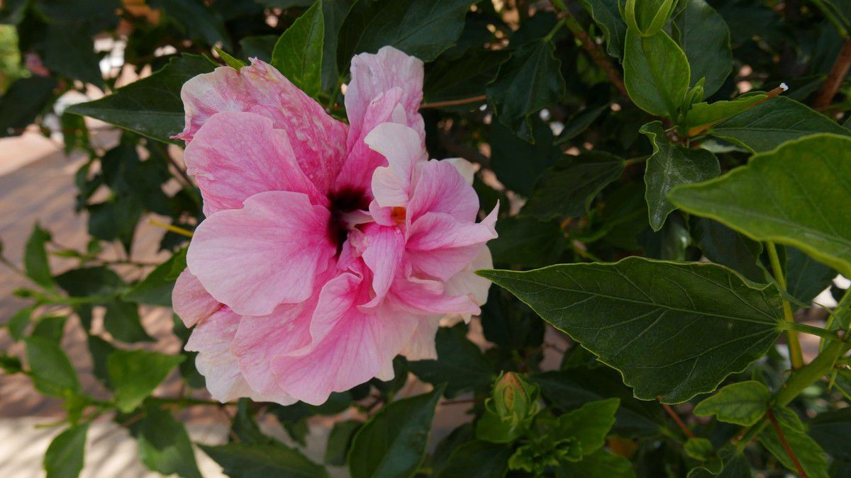 Un peu de fleurs du coin ( Estepona , Andalousie ) ...