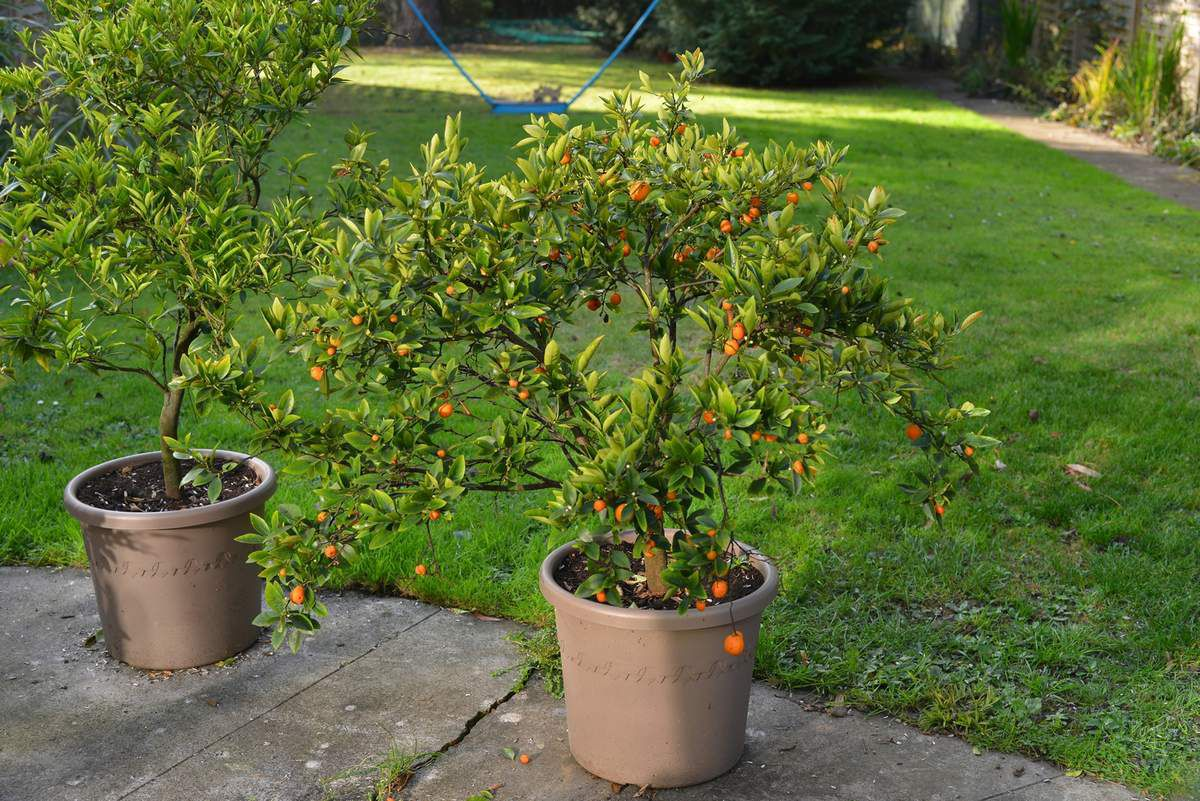 Fruits de saison ...