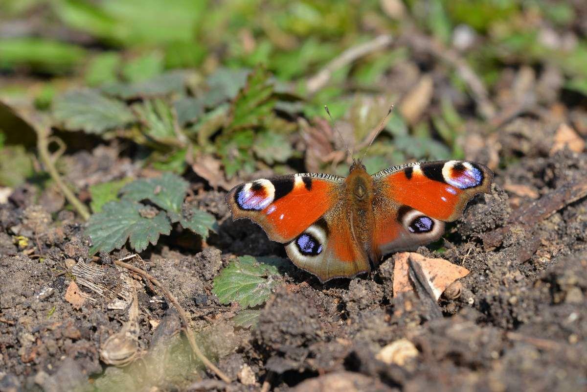 Papillons de saison ...