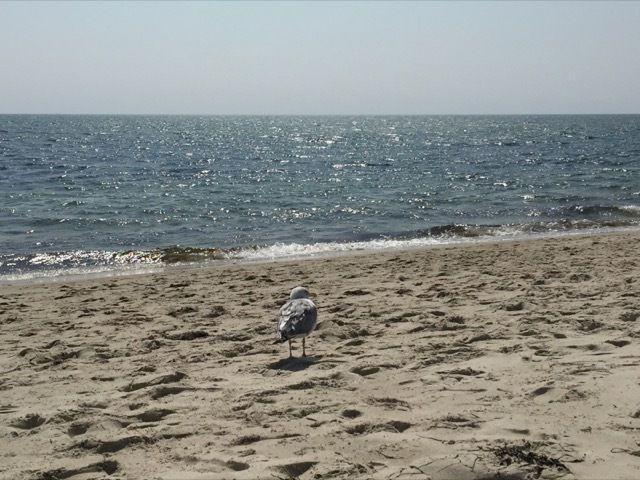 la plage est calme