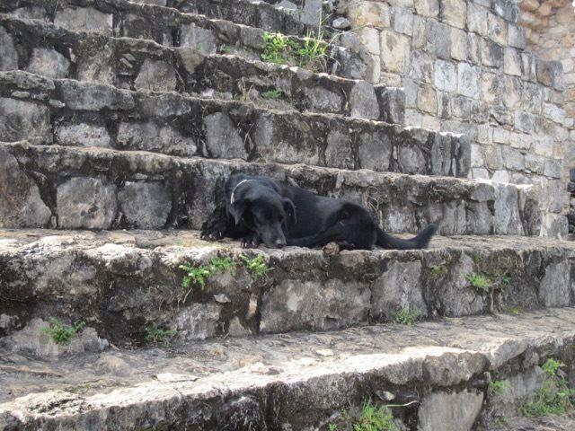 """ce chien """"surveille"""" les escaliers qui menent au sommet du palace"""